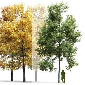 3D model deciduous tree ash-tree ash