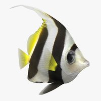 bannerfish animation bones 3D model