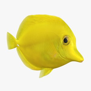 yellow tang animation bones 3D