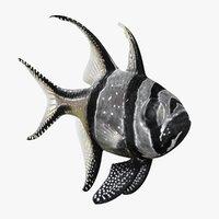 3D banggai cardinalfish animation bones model