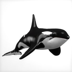 killer whale animations 3D