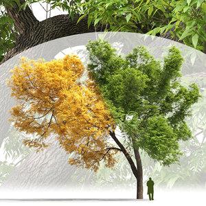 deciduous tree ash-tree 3D model