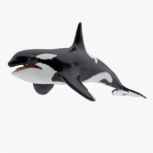 3D killer whale animations model