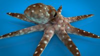 octopus nature animals model