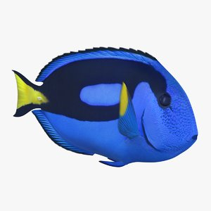 blue tang animation 3D