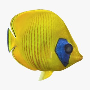 bluecheek butterflyfish animation 3D model