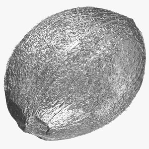 coconut 01 silver 3D model