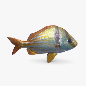 3D porkfish pbr