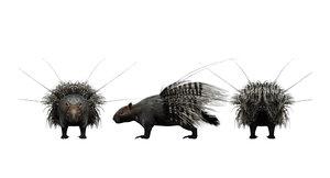 porcupine3d 3D