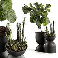 ficus pots 3D model