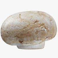 3D white button mushroom 03 model