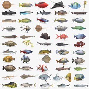 pbr fish wrasse snapper 3D model