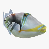 3D model triggerfish animation bones