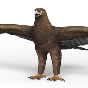 ready eagle 3D model