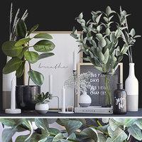 Decorative set ficus and eucalyptus