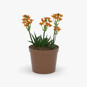 3D flowers plant nature model