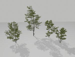 little trees 3D
