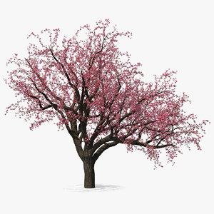 3D blooming peach tree