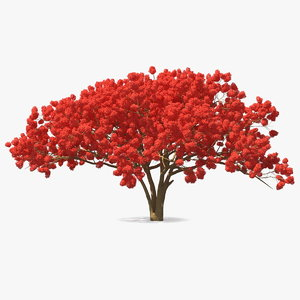 3D royal poinciana flame tree