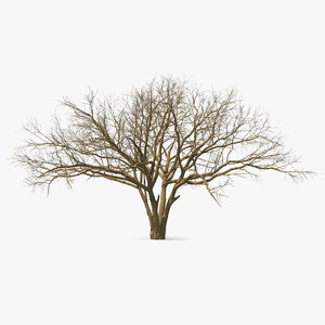 naked tree winter 3D model