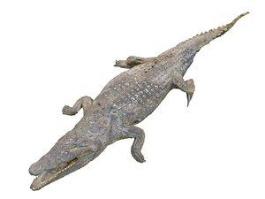 3D nile crocodiles