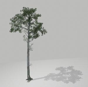 tall tree bark 3D model
