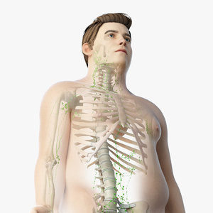 3D skin obese male skeleton