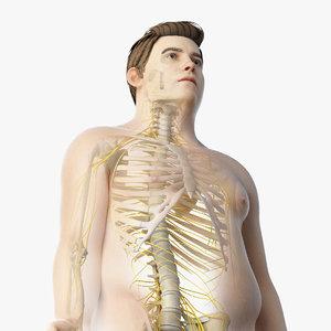 3D skin obese male skeleton