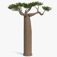 Baobab Tree Low Poly