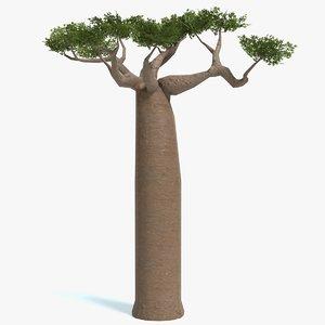 baobab tree polys 3D