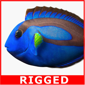 rigged regal blue tang 3d model