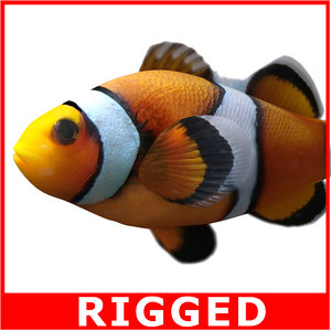 clownfish rigged 3d model