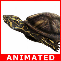 Turtle (Rigged and Animated)