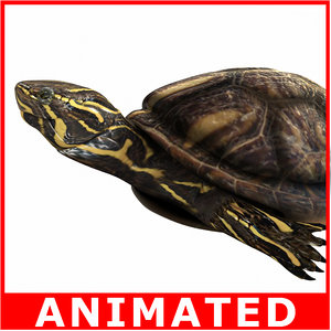turtle rigged animation sea 3d model