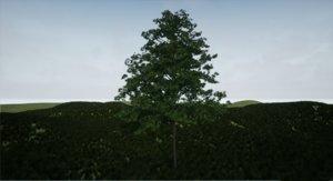 3D tree hainbuche