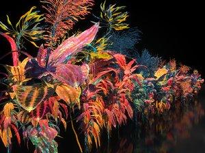 pandora flower 3D model