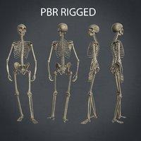 Rigged Human skeleton