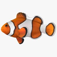 clownfish scanline model