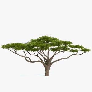 acacia tree polys 3D