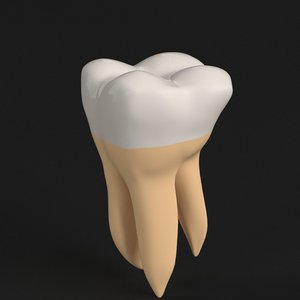 stylized human second molar 3D model