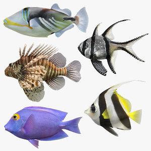 3D model saltwater fish set