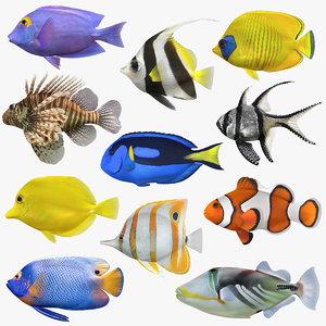 3D saltwater fish 2 model