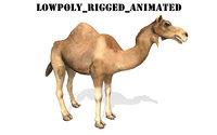 3D dromedary camel rigged animal model