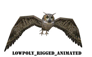 realistic owl bird model