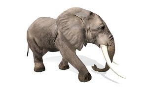 wild animal elephant rigged 3D