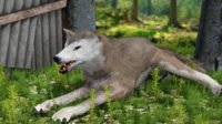 wolf animations 3D model