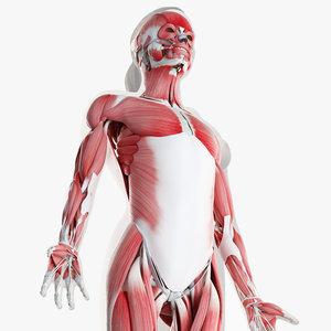 3D skin female skeleton muscles model