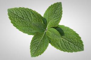 3D peppermint mint leaf food