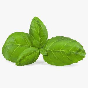 fresh basil leafs 3D