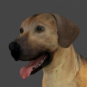 rigged male dog model